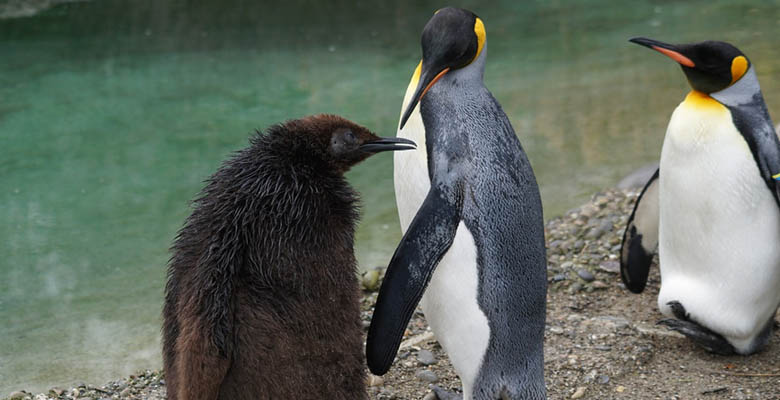 Down Feathers World Penguin Day