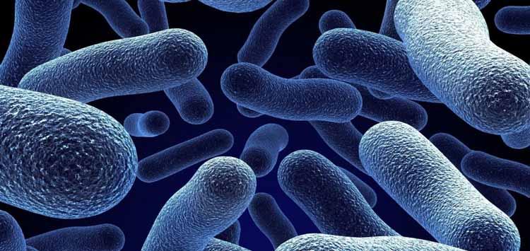 Marine Bacteria & Viruses