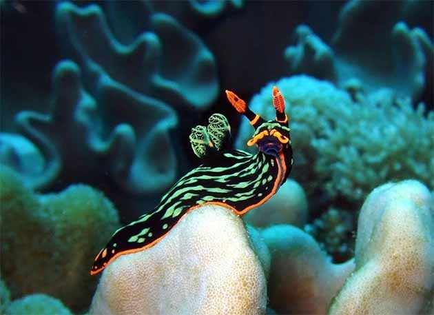 Picture of a colourful and small Nudibranch