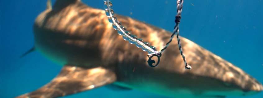4 Ocean bracelet underwater
