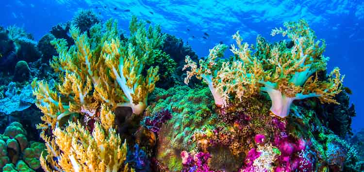 How to Treat Coral Abrasions