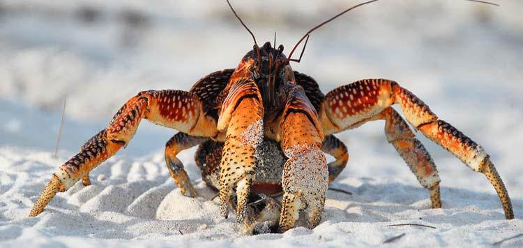 Treating Marine Animal Bites