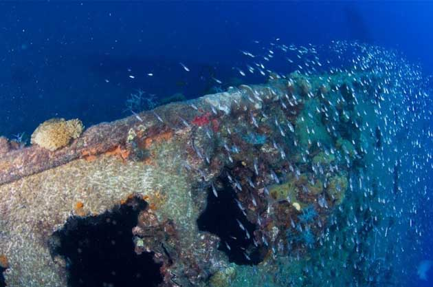 Yongala wreck and fish