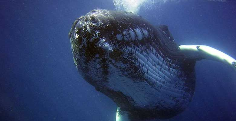 Humpback Whale World Whale Day