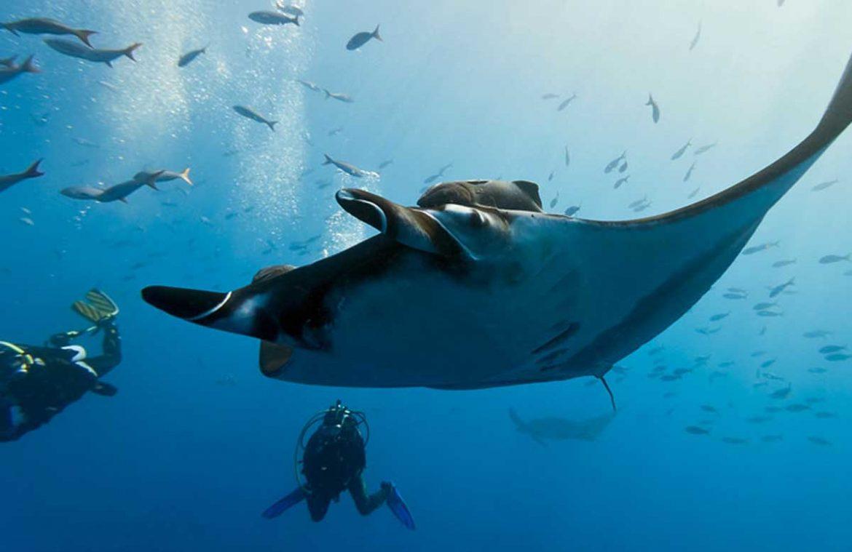 ca37350b01 Manta Ray Dive Kona