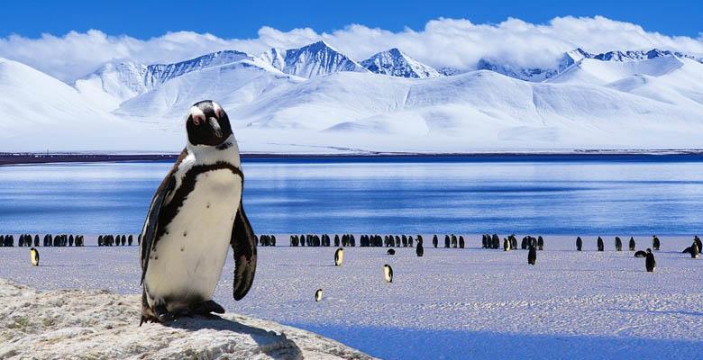Penguins have Knees