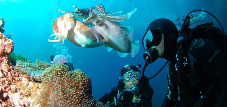 Practice Buoyancy Control