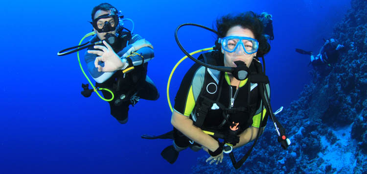 Dive Buddies Together