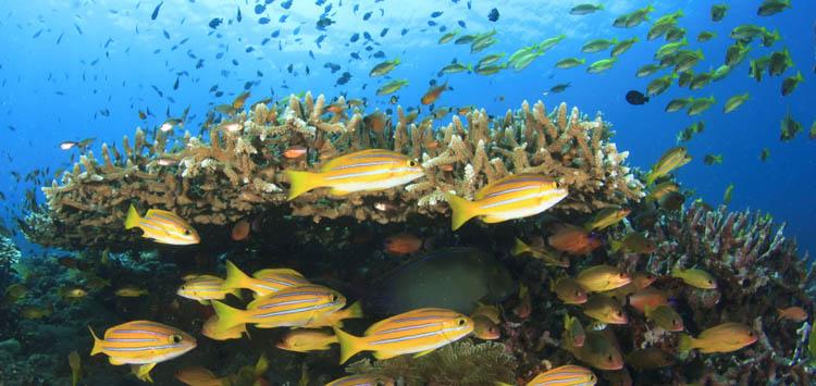 Mid Reef Sipadan Island