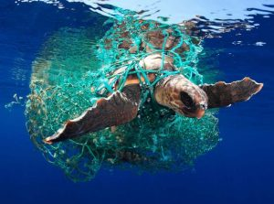 Turtle Entangled in Net