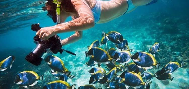 Snorkeling in Egypt