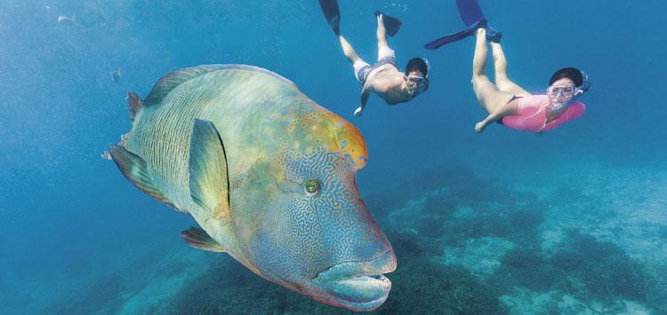 Snorkeling in New Zealand