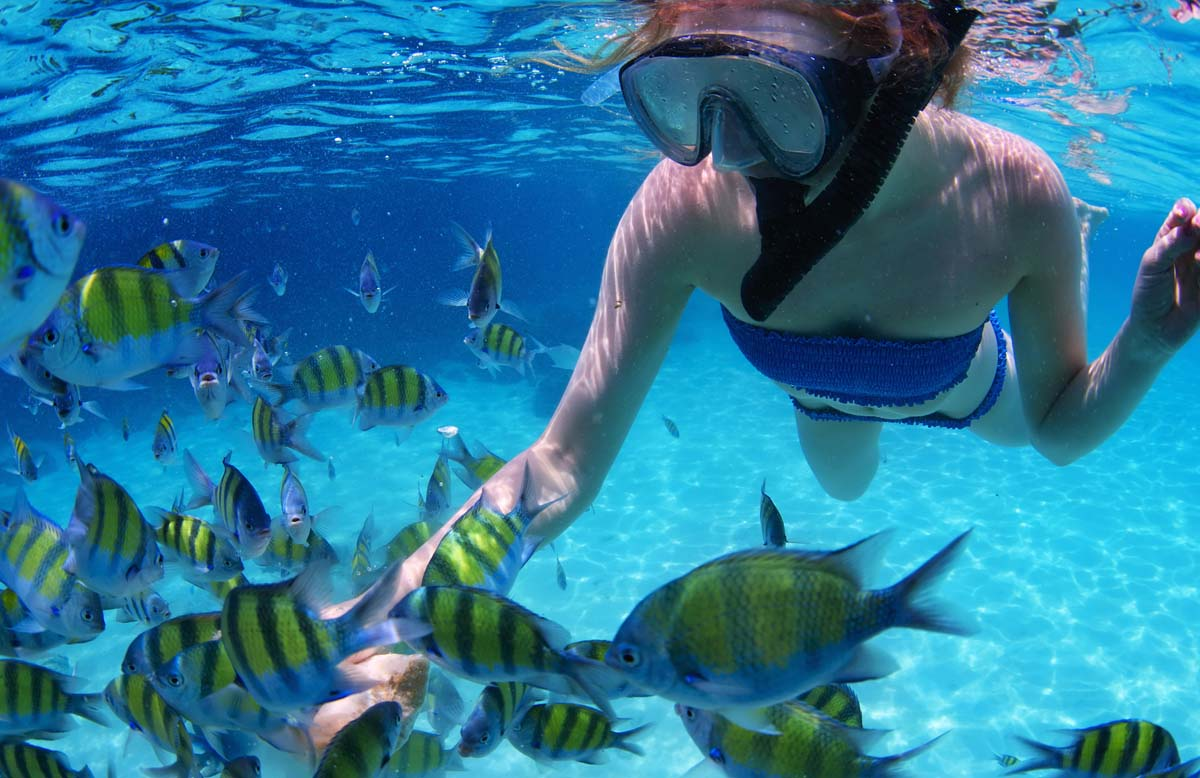 Best Dry Snorkels on the Market