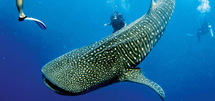 Marine Life Belize Diving