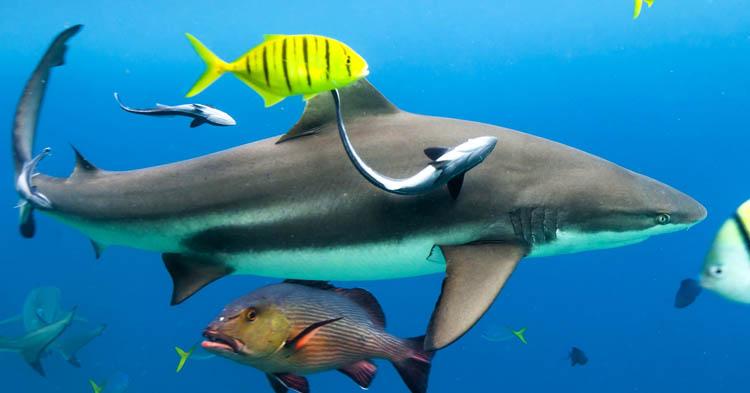 Shark Angels Conservation Efforts