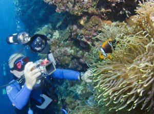 Underwater Photography Using a Strobe