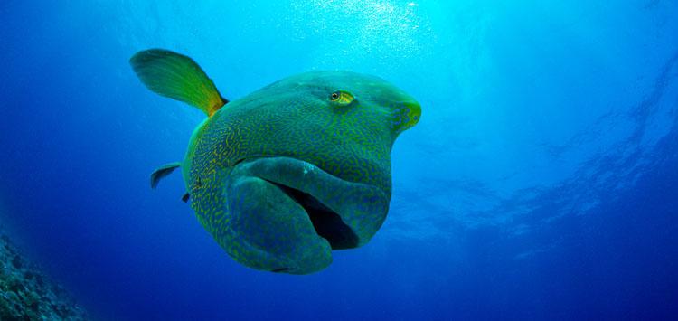 Capturing Colors Underwater