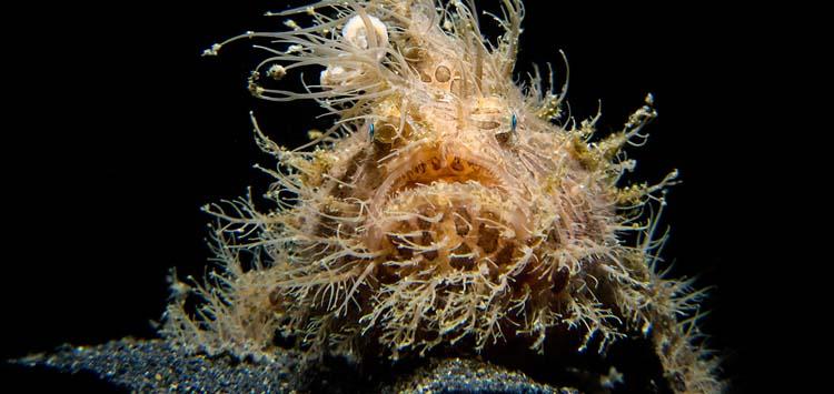Underwater Photography Lighting Advice
