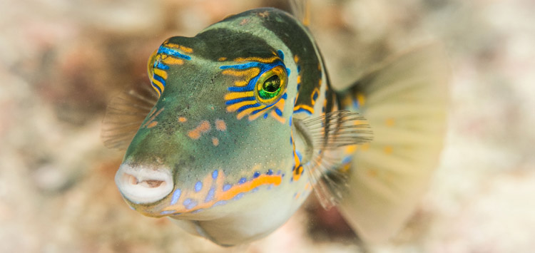 Underwater Photography Lighting Tip