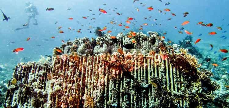 Diving Shark Reef and The Yolanda Wreck