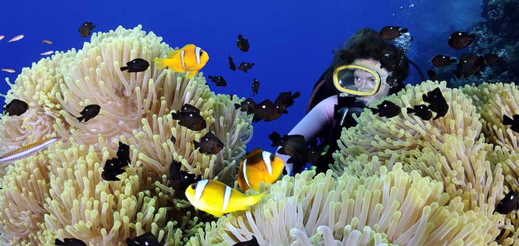 Egypt Best Dive Destinations for Underwater Photography