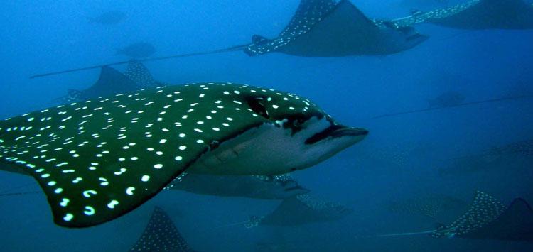 Santa Catalina Island Best Dive Destinations for Underwater Photography
