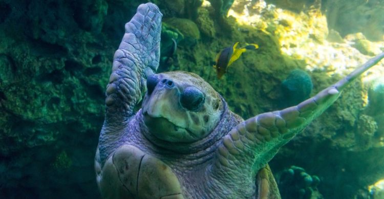 Why Do We Celebrate World Turtle Day